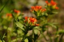 Leviflowers